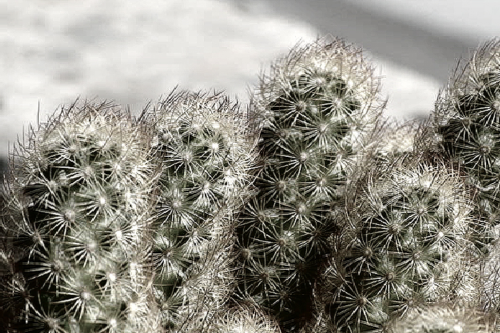photo of cactus